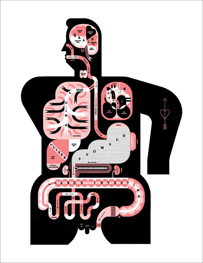 "MALE & FEMALE ANATOMY"" - Raymond Biesinger Illustration Inc."